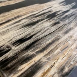 StèleBP - bois pétrifié _ FOSSILE